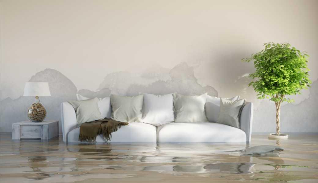 dégats des eaux percy rauchs